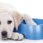 Are you asking the right questions? Intimate Partner Violence and Pet Abuse