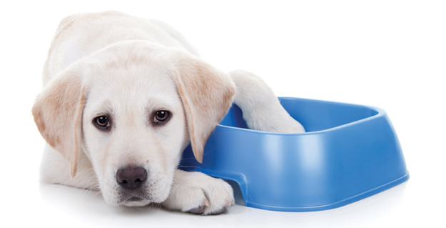 A sad dog rest his head on an empty water bowl